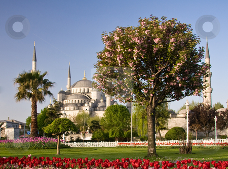 Blue Mosque 3 stock photo, Blue Mosque in Istanbul with tulips in the foreground by Steven Heap