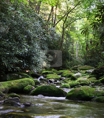 Rural River with Mossy Rocks stock photo, Gentle Rural river in Smoky Mountains over green mossy rocks by Steven Heap
