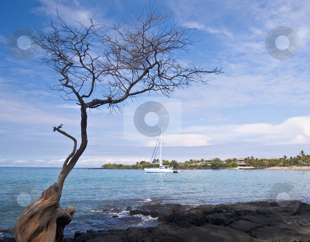 Hawaiian Bay with Tree and Boat stock photo, Overview of Hawaiian Bay framed by gnarled tree with boat in the distance by Steven Heap