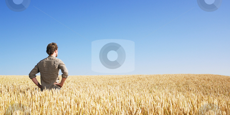 Young man in wheat field stock photo, Young man in wheat field by Mog Ddl