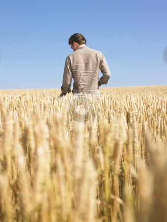 Man in Wheat Field stock photo, Man standing in wheat field. Vertically framed shot. by Mog Ddl