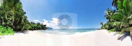 Paradise beach stock photo, Panoramic vue of idle beach with palmtrees by Mog Ddl