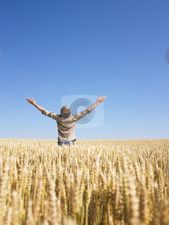 Man in Wheat Field  With Arms Outstretched stock photo, Man standing in wheat field with arms raised. Vertically framed shot. by Mog Ddl