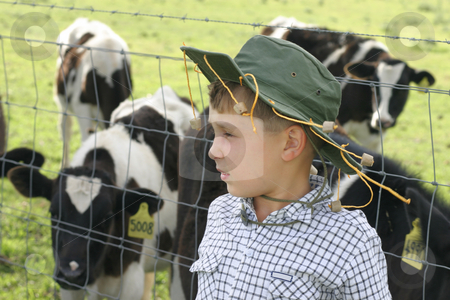 Young Drover with cows stock photo, Little farmer boy with his cattle by Leah-Anne Thompson