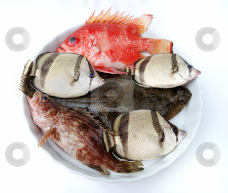 Set of tropical fishes stock photo, Set of tropical fishes on white plate on white background by Nataliya Taratunina
