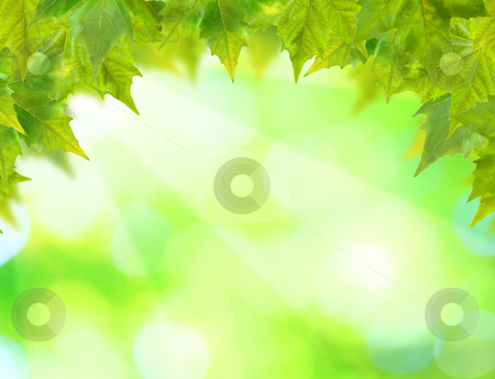 Beautiful green leaves with green background in spring stock photo, Beautiful green leaves with green background in spring by Julian Weber