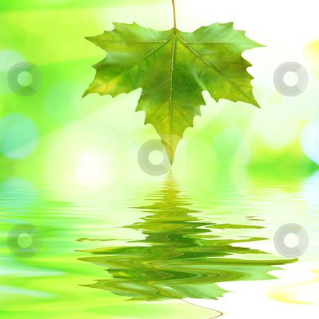 Beautiful green leaves with green background in spring stock photo, Beautiful green leaves with green background and reflection in spring by Julian Weber