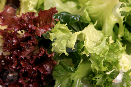 Lettuce close up stock photo, Mixed lettuce leaves closeup by Leah-Anne Thompson