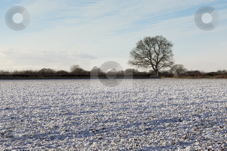 Cold winter day stock photo, A snowy field with hedgerows and a tree on a cold winters day by Mike Smith