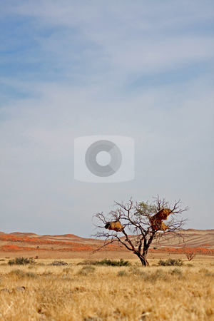 Landscape in Namibia stock photo, Landscape in Namibia;