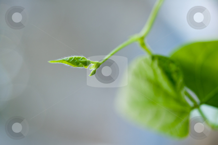 Young green leaves stock photo, Young green leaves lit by sun. Beautiful bokeh in the background. by Natalia Banegas