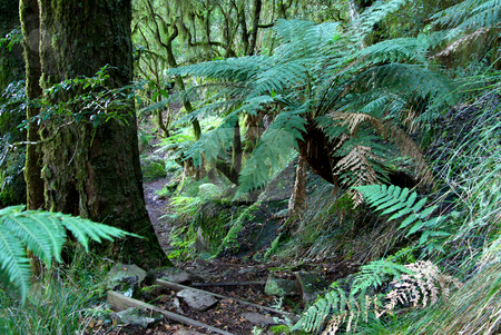 Ferns stock photo, Tree ferns and plants in the oxley world heritage rainforest by Phil Morley