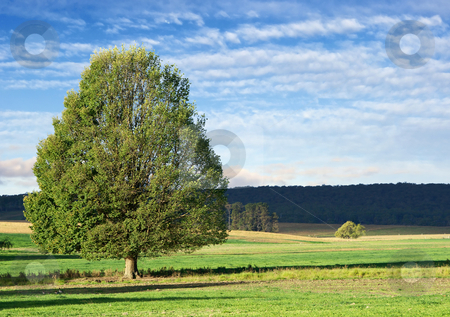 Landscape tree stock photo, Landscape of a single green bushy tree in green field by Phil Morley