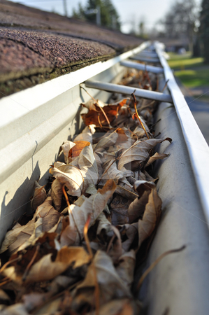 Leaves in rain gutter. stock photo, Home maintenance: Fall leaves in rain gutter. by Fernando Barozza