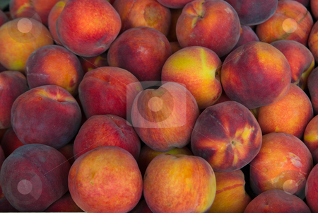 Pfirsich/Peach (Prunus persica) stock photo, Der Pfirsich (Prunus persica) ist eine der wichtigsten Arten der Gattung Prunus. - The peach (Prunus persica) is known as a species of Prunus native to China that bears an edible juicy fruit also called a peach. by Wolfgang Heidasch