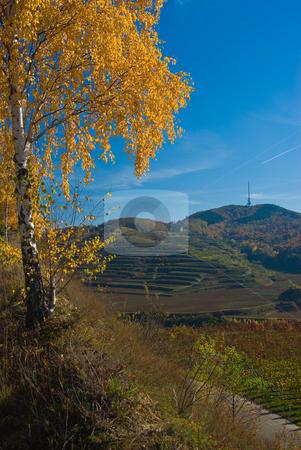 Landschaft am Kaiserstuhl Landscape in Kaiserstuhl/Germany stock photo, Der Kaiserstuhl ist ein bis 557 m ?. NN hohes Mittelgebirge vulkanischen Ursprungs im S?dwesten von Baden-W?rttemberg (Deutschland). - The Kaiserstuhl (literally