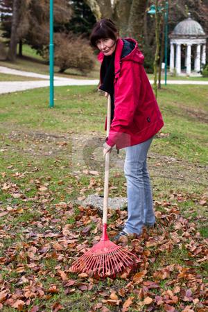 Woman Raking Leaves stock photo, Middle Aged woman raking leaves in yard. Vertically framed shot. by Erwin Johann Wodicka