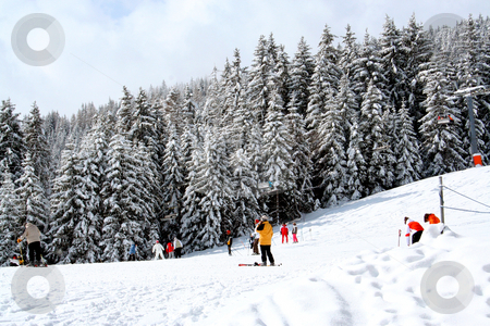 Skiers and alpine forest stock photo, Scenic view of skiers of wintry slope with alpine forest in background, Swiss Alps. by Martin Crowdy