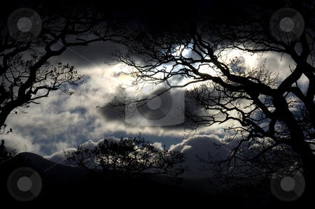 Storm clouds stock photo, Scenic view of storm clouds with silhouetted trees in foreground. by Martin Crowdy