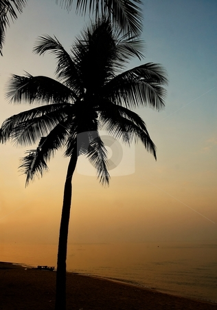 Palma. Sunset on the beach. stock photo, Amazing palma on the beach with mysterious sunset light. by Oleg Blazhyievskyi