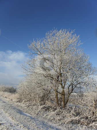 Hoar frost stock photo, Small tree covered in winter frost by the side of a fozen track under a blue sky by Mike Smith