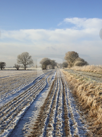 Frozen landscape stock photo, Frozen fields and trees under a wintery sky by Mike Smith