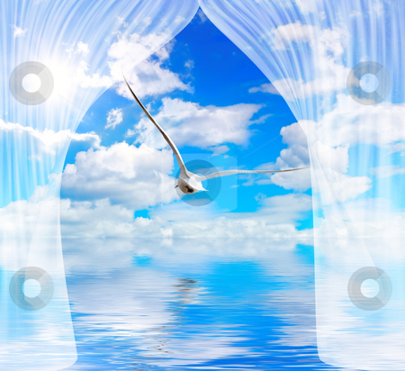 Seagull water and sun through curtain stock photo, Blue cloudy sky with sun and seagull through curtain by Sergej Razvodovskij