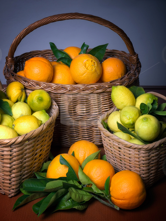Harvest of citrus stock photo, Baskets full of citrus fruits after the harvest. by Sinisa Botas