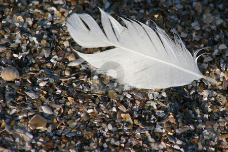 Feather stock photo, White feather on rocky  beach by Darryl Brooks