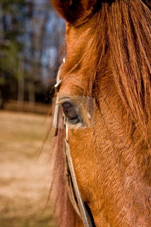 Horses Eye stock photo, A close up of a horse showing the eye by Darryl Brooks