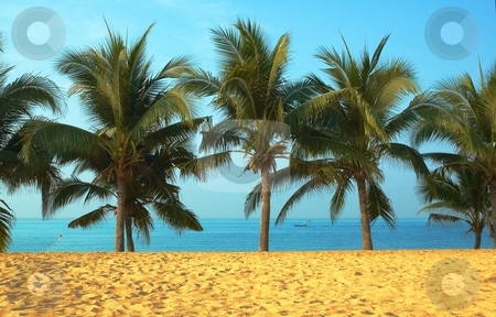 Palmas and ocean. stock photo, Paradise symbol  by Oleg Blazhyievskyi