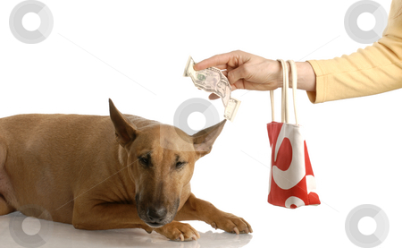 Paying for expensive dog stock photo, Expensive dog - handing over money to bull terrier - american currency by John McAllister