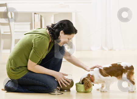 Woman Feeding Puppy stock photo, Woman feeding and petting puppy. Horizontally framed shot. by Jonathan Ross