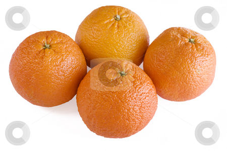 Four Scarlet Oranges stock photo, Four oranges isolated on a white background. by Brigida Soriano