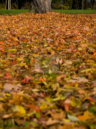 Autumn (fall) leaves in Rosenstein Park, Stuttgart stock photo, Autumn (fall) leaves in Rosenstein Park - Stuttgart, Germany by Richard Williamson