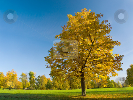 Autumn (fall) leaves in Rosenstein Park, Stuttgart stock photo, Autumn (fall) leaves in Rosenstein Park, with clear blue sky, Stuttgart by Richard Williamson