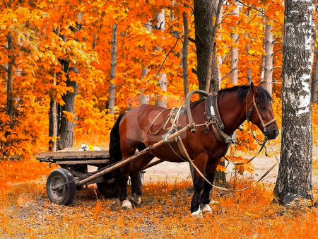 Horse in golden autumn stock photo, Waiting horse in golden autumn forest by Sergej Razvodovskij