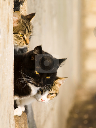 Cats stock photo, Three cats outdoor in sunny day by Sergej Razvodovskij