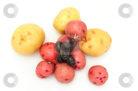 New potatoes stock photo, Three different kinds of potatoes in different colors, red, purple and yellow by Lynn Bendickson