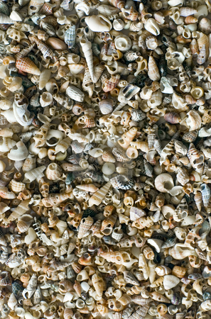Sea Shells stock photo, Background image of a large assortment of small seashells by Stephen Gibson