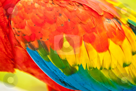 Feather stock photo, Colorful macaw feathers by Jack Young