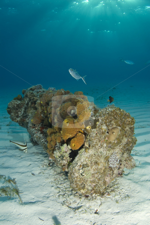 Bahamas Encrusted Wreckage stock photo, Sun beams shine down from the surface of the ocean onto a coral encrusted piece of wreckage on the ocean floor by A Cotton Photo