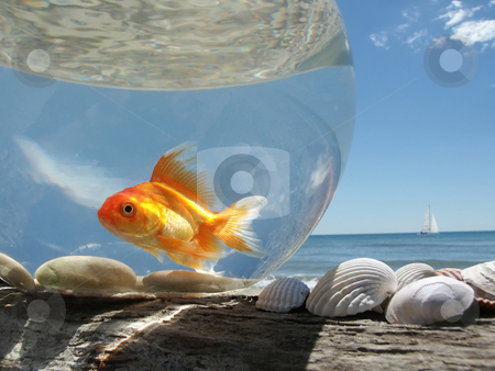 Goldfish on Holiday stock photo, A Goldfish in its aquarium on the beach, prisoner of this glass bubble ... by Fred DE BAILLIENCOURT