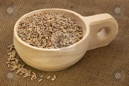 Scoop of rye grain stock photo, Rye grain on a rustic, wooden scoop against brown burlap background by Marek Uliasz