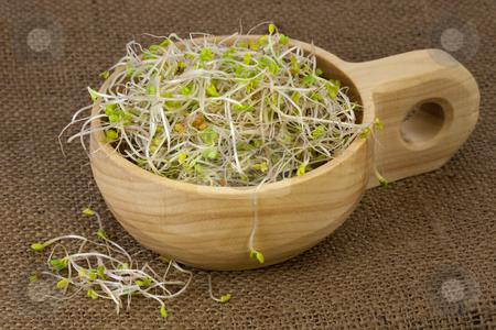 Broccoli, radish and clover sprouts in a wooden bowl stock photo, Broccoli, radish and clover sprouts in a wooden rustic bowl, burlap background by Marek Uliasz
