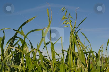 Green Grass and Blue Sky stock photo, Green Grass and Blue Sky on a Summer Day by Brandon Bourdages
