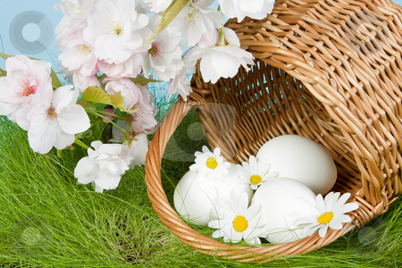 Easter blossoms and eggs stock photo, White eggs and spring blossoms in an easter basket by Anneke