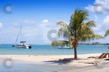 Coconut palm tree on tropical beach stock photo, Coconut palm tree growing on the tropical beach of Albion on the island of Mauritius. by Gowtum Bachoo