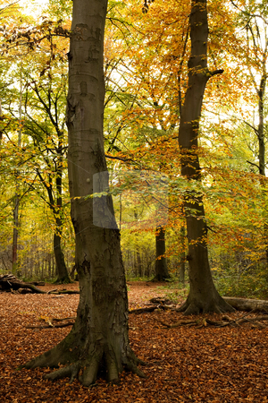 Autumn forest stock photo, Nice multi color autumn forest with yellow green and brown color leaf by Karin Claus