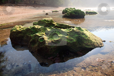 Moss covered rock reflected in pool stock photo, Moss or lichen covered rock in the shallows off Tunnels beach on Kauai by Steven Heap